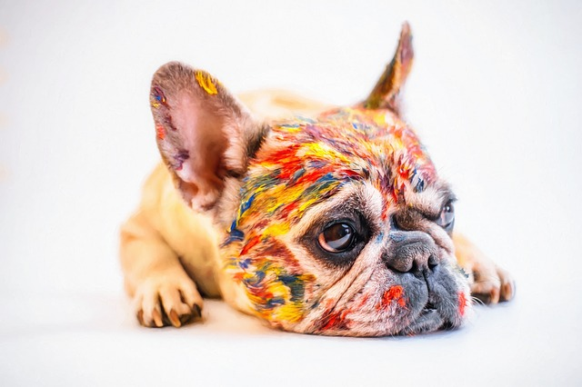 Color My Life Happy Dog with Paint - Maria Lesetz Coaching